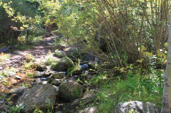 IMG_6312 craig creek
