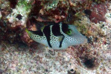photo1430313913984 fish