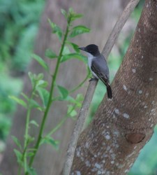 img_2130-bird