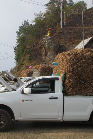 Trucks and trucks of freshly picked garlic. No vampire issues here!
