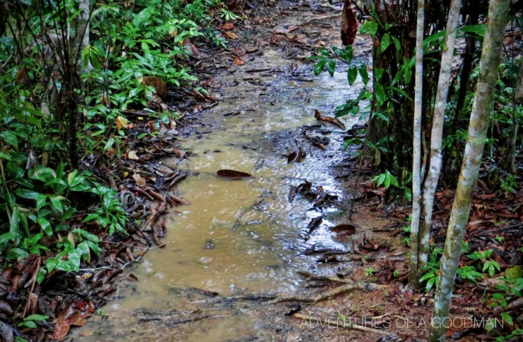 The path outside my hut was constantly flooded during the frequent rainforest rains.