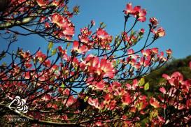 colorful spring in meran