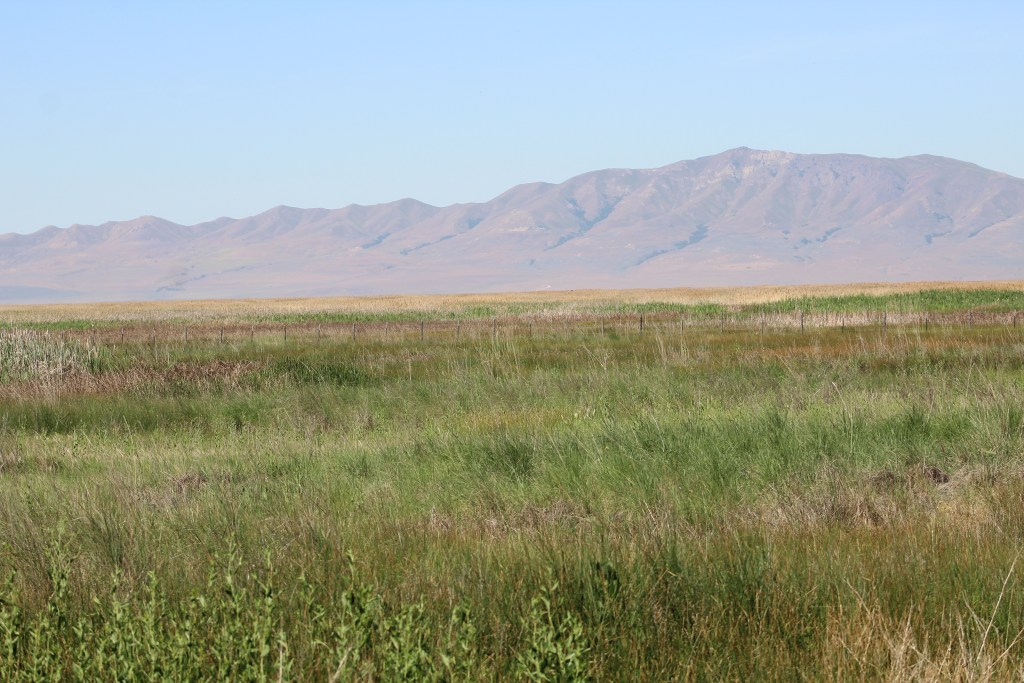 View from Great Salt Lake Shorelands Preserve