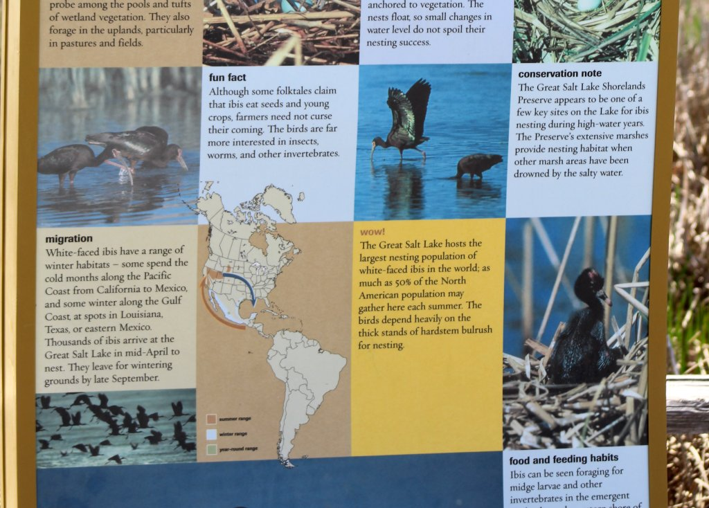 Migration information at Great Salt Lake Shorelands Preserve