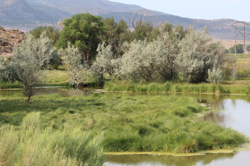 Heppler's Ponds