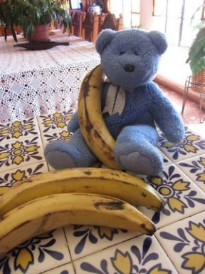 Blue Bear with plantains