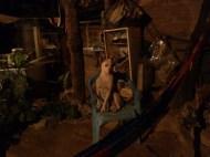 Watch dog,, El Ocotito, Mexico