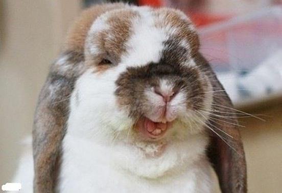 Cute-Rabbits-024