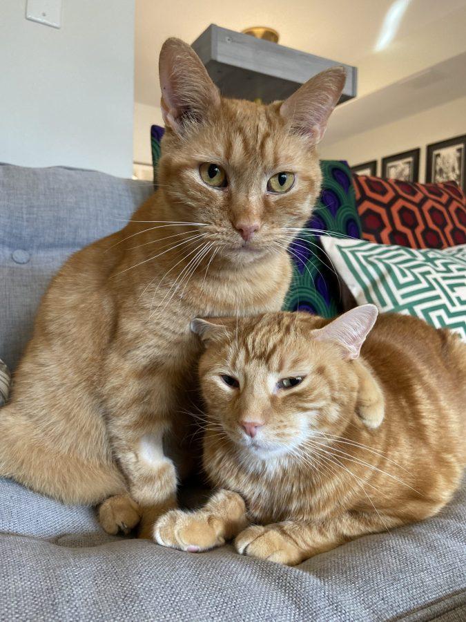 Cheddar + Linus