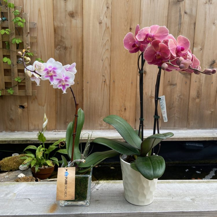 New orchids