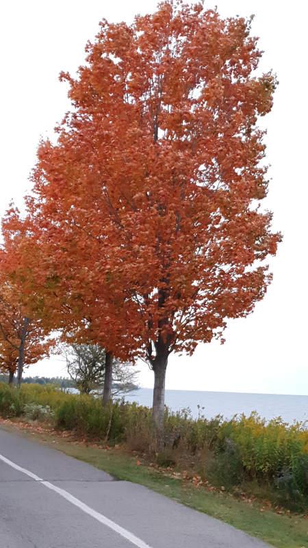 Trees in Fall 2020