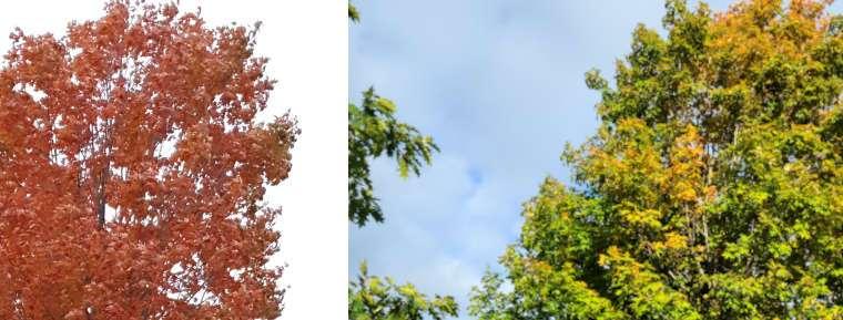 Autumnal Comparison