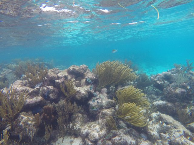 Clear-Water-For-Reef