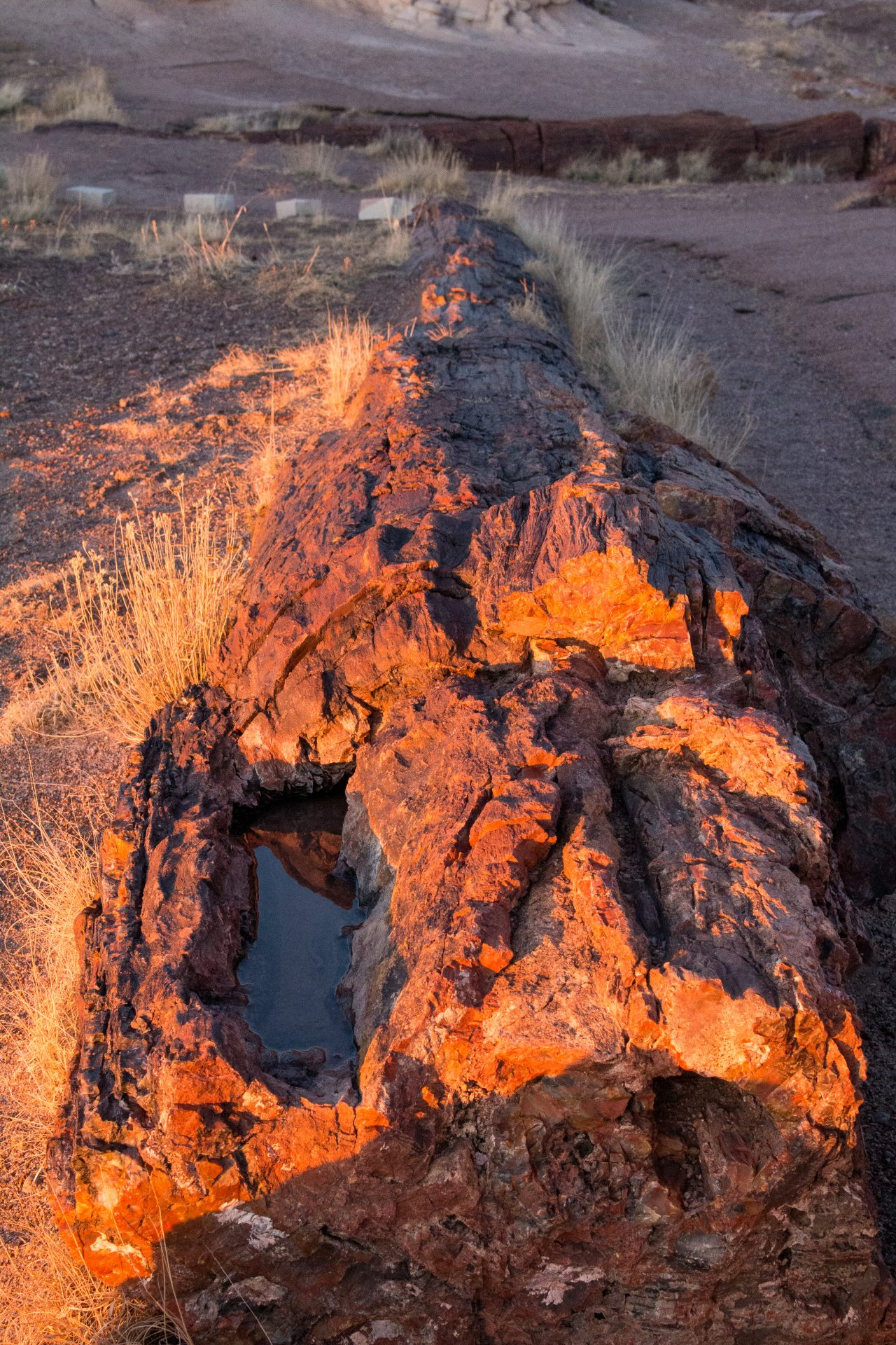 Petrified National Forest – A Look Into Arizona's Past