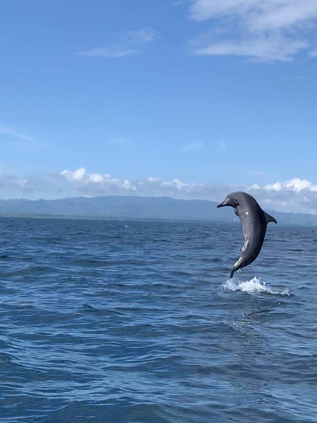 Pura Vida, Costa Rican Culture, Mangroves & Dolphins…36