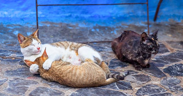 Kitten and Mama Cat Morocco