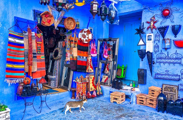 Chefchaouen Shop Cat