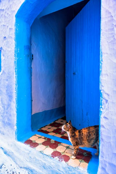 Chefchaouen Cat Door
