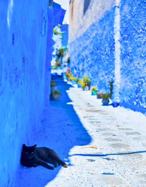 Cat in Chefchaouen Hall