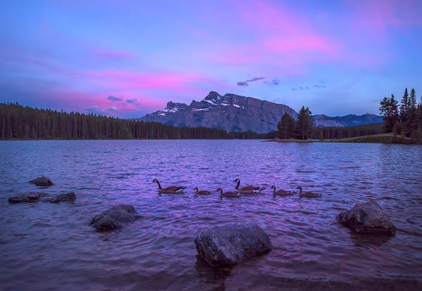 Canada Geese Sunset Lake