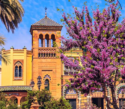 Seville Flowers