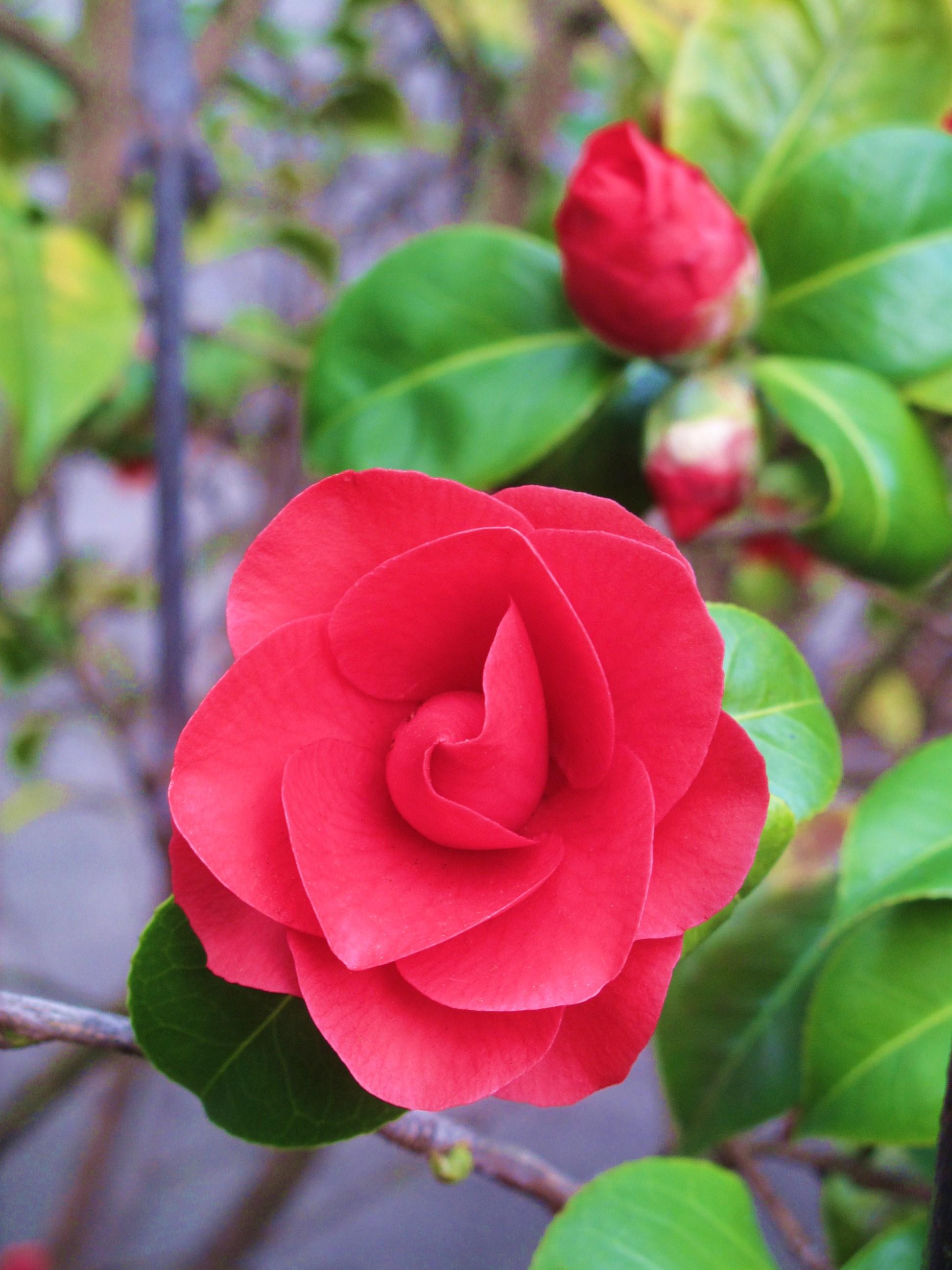 London In Bloom Kew Gardens
