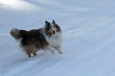 I love snow walks