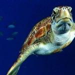 Thailand offers fantastic underwater diversity
