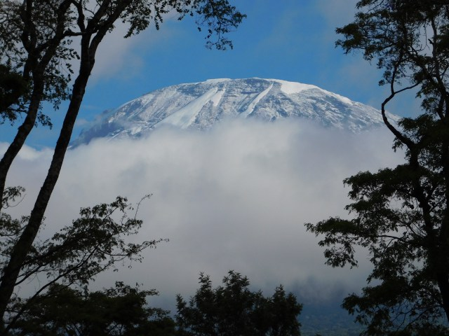 Kilimanjaro, as seen from Halisi Machare