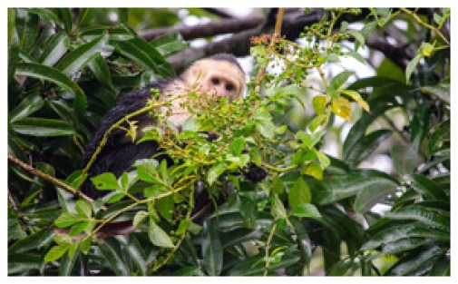 Cahuita and Manuel Antonio are amazing for accessible wildlife!