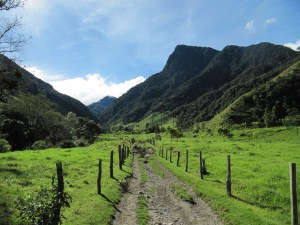 Cocora Valley Trail