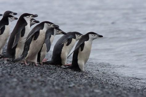 8-Day Antarctica Fly/Cruise