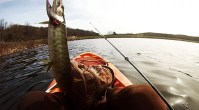 NJ Tiger Musky Fishing-Ken Beam fishes for Tiger Musky