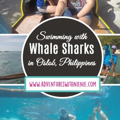 Swimming with Whale Sharks in Oslob