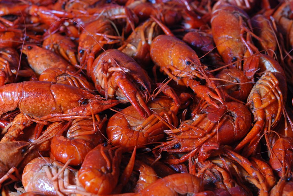 Crawfish in New Orleans | Adventures with Shelby