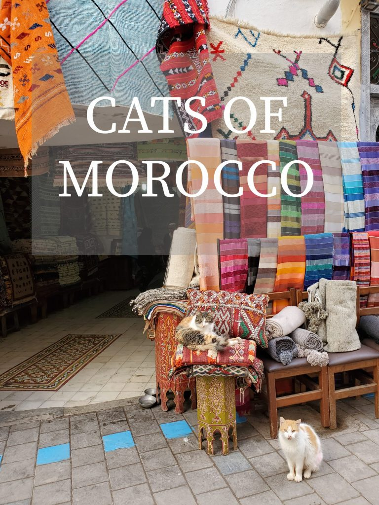 Street Cats of Morocco | Adventures with Shelby