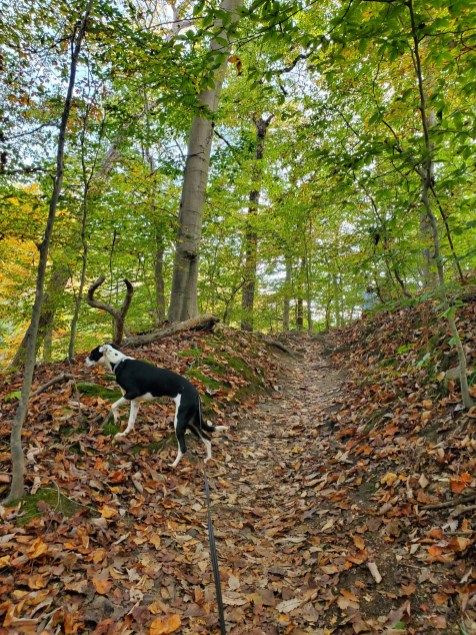 Rock Creek Park in Washington, DC | Adventures with Shelby
