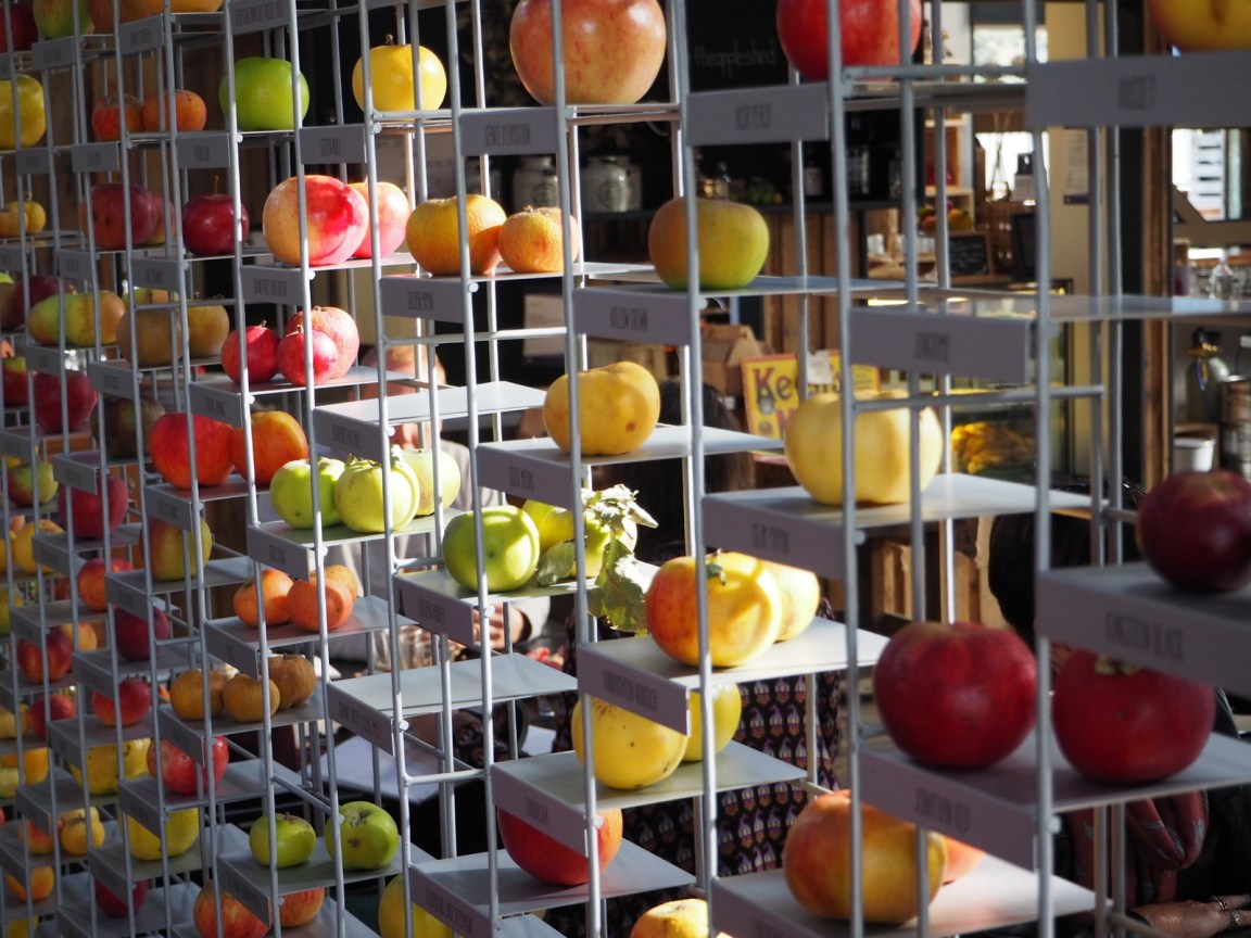 Apple varieties on display at Willie Smiths Apple Shed
