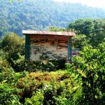 El Bosque de Protección de Pagaibamba Perú