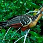 El Parque Nacional del Manu (PNM)