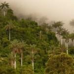 El Parque Nacional de Cutervo
