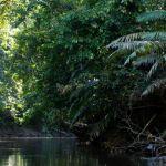 La Reserva Nacional Matsés es una zona protegida del Perú ubicada en la Región Loreto, Amazonía peruana.