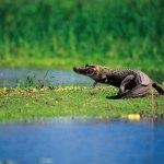 Reserva Nacional es llamada la Selva de los Espejos