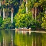La Selva Amazónica. Paraíso natural en la Amazonía del Perú