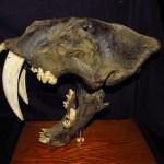 Museo_de_Historia_Natural_Vera_Alleman_Haeghebaert_Lima_Perú