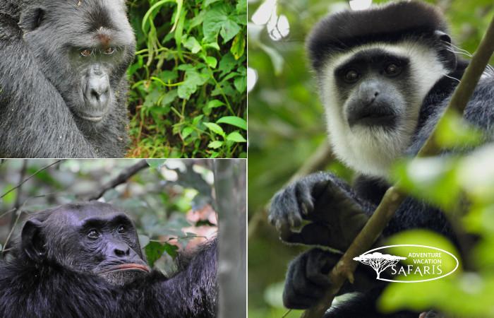 Uganda's Primates
