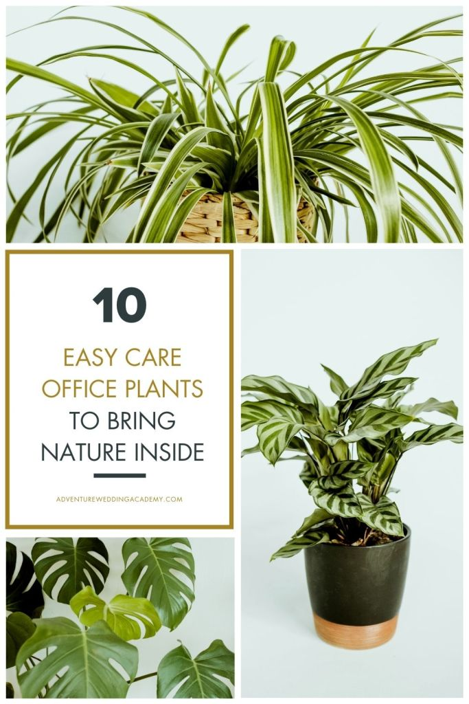 10 easy care office plants