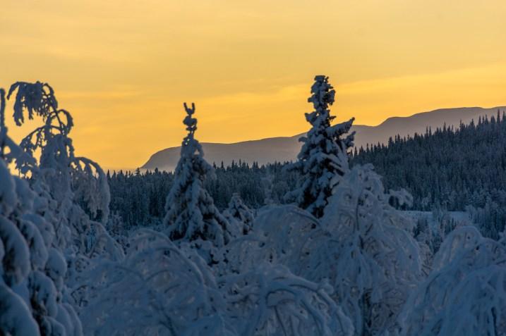 Decemberljus på turskidor i Åre