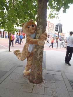 Bear hugging tree