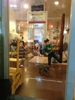 Quick look at the cat cafe. OMG!